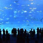 【銀座の熱帯魚店 パウパウアクアガーデンの情報をチェック】夜の巷を徘徊する 2017/9/21放送