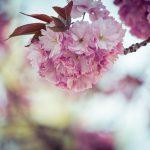 【桜グルメ・桜スポットはどこ?番組で紹介した情報のまとめ】マツコの知らない世界【桜の世界】 2018/3/20放送